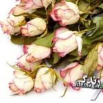 گل هاي طبيعي را با سيليكا ژل خشك كنيد