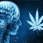 cannabis_brain_0