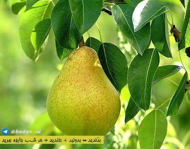 پرتقال یکی از پرطرفدارترین میوه های زمستانی است که اغل برای درمان سرما خوردگی ، این میوه را پیشنهاد می کنند. آیا می دانستید که یکی از بهترین روشها برای جلوگیری از سرطان معده ، مصرف پرتقال است؟ با خواص بی نظیر این میوه محبوب آشنا شوید.